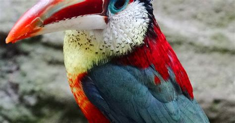 10 Exotic Birds That You ve Never Seen Before.