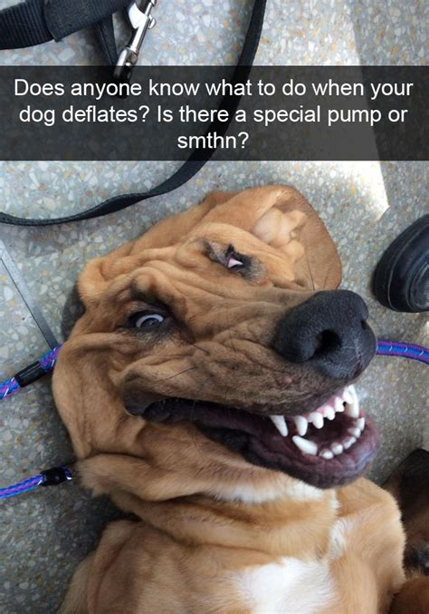 10+ Hilarious Dog Snapchats That Are Impawsible Not To ...