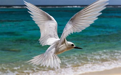 10 Most Beautiful Flying Birds New HD Wallpapers 2014 ...