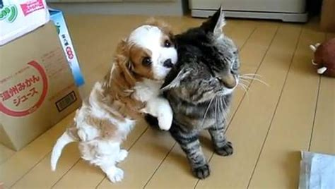 10 of the cutest puppy videos on YouTube | MNN   Mother ...