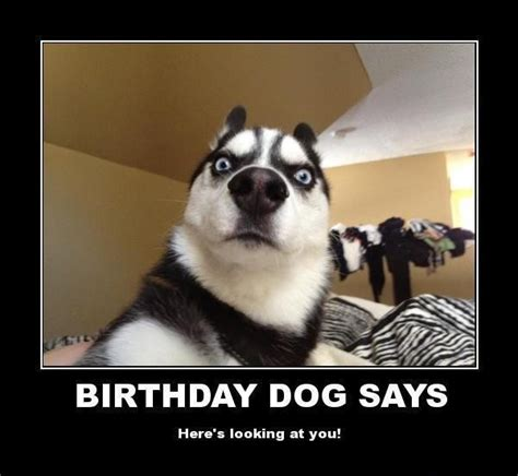 100 Ultimate Funny Happy Birthday Meme s   My Happy ...