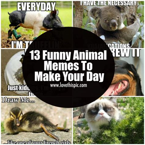 13 Funny Animal Memes To Make Your Day