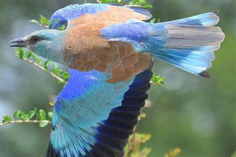 147 best images about Exotic/Tropical Birds on Pinterest ...
