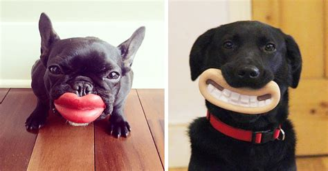 15+ Dogs That Have No Idea How Silly They Look With Their ...