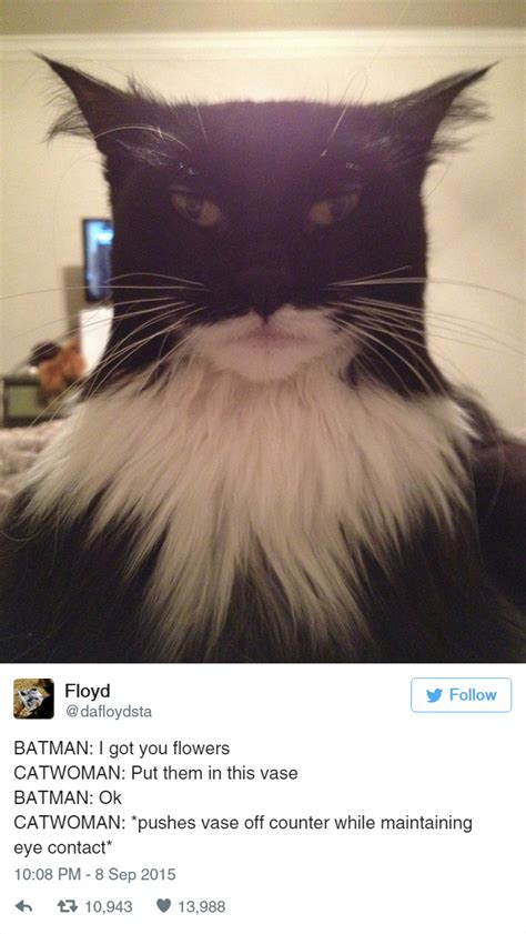 15+ Funny Tweets About Cats | Bored Panda