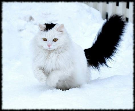 214 best images about Cats In Snow on Pinterest | Snow ...