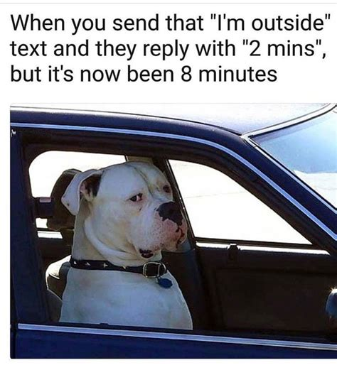 24 Cute Funny Animal Memes That Will Make You Smile