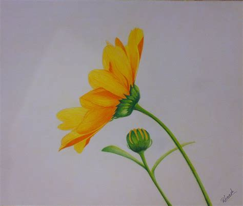 25 Beautiful and Stunning Flower Drawings from around the ...