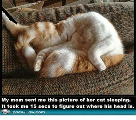 25+ Best Memes About Cats, Grumpy Cat, and Moms | Cats ...