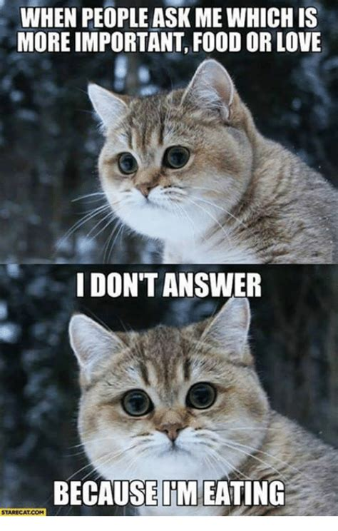 25+ Best Memes About Food and Grumpy Cat | Food and Grumpy ...