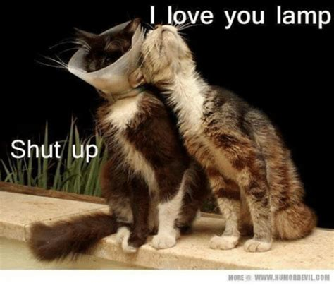 25+ Best Memes About Grumpy Cat and I Love You | Grumpy ...