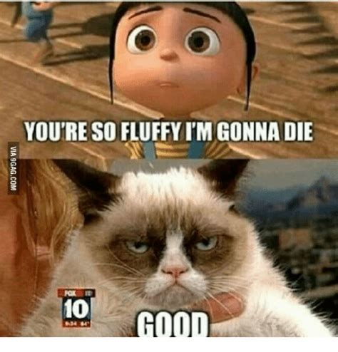 25+ Best Memes About Youre Awesome Cat   Youre Awesome Cat ...