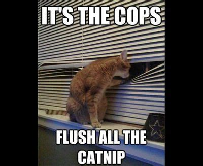 25 Funny Cat Memes To Make You Laugh | Memes, Be cool and Cops