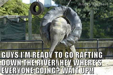 30 Most Funny Elephant Meme Pictures And Photos
