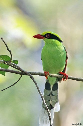 430 best images about Birds on Pinterest | South america ...