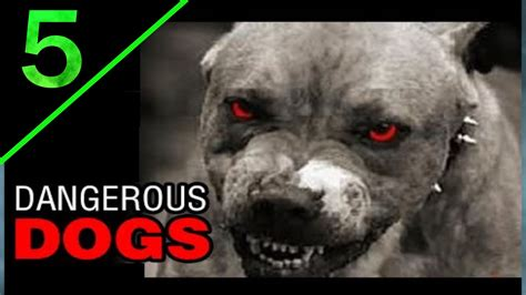 5 Most Dangerous Dogs Breeds In The World   YouTube