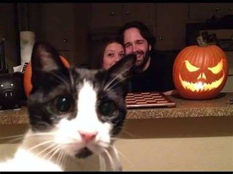 50 Funniest Cat Photobombs EVER! FUNNY CATS! Photobombs ...