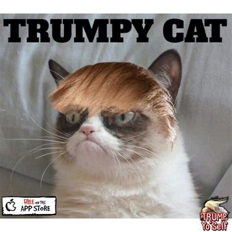 650 best grumpy girl images on Pinterest | Cat memes ...