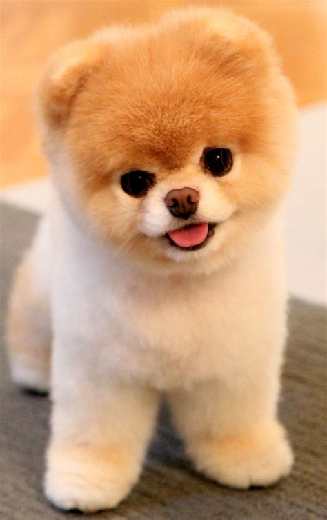 7 Dogs That Look Like Stuffed Animals | Rover Blog
