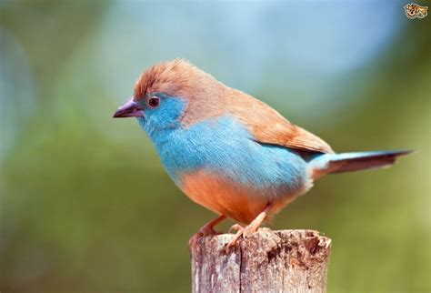 A Guide to Exotic Finches | Pets4Homes