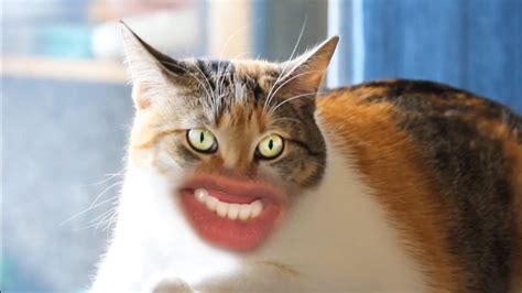 A Ridiculous Video Featuring Cats With Human Mouths ...