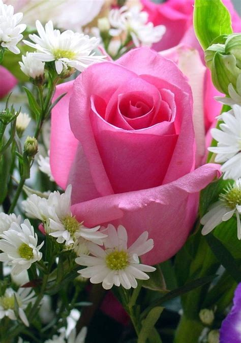A Single Pink Rose for a Queen | Roses | Pinterest | Pink ...