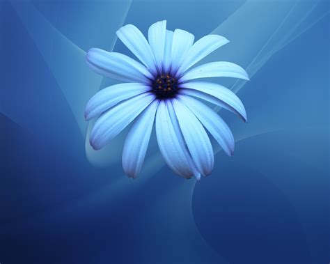 All photos gallery: Blue flower pictures, picture of blue ...