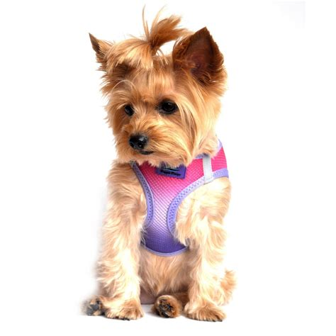 American River Ombre Small Dog Harness | DinkyDogClub