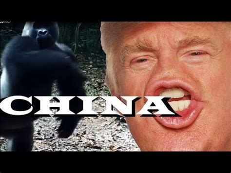 Animals Being Triggered by Donald Trump Memes?!   YouTube