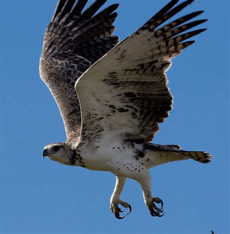Animals Zoo Park: Birds Flying, Flying Birds Pictures and ...