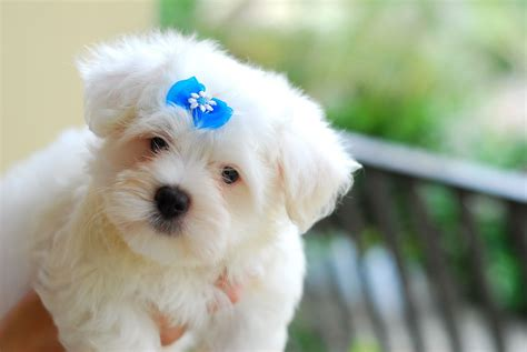 Animals Zoo Park: Top 10 Small Dog Breeds in America With ...