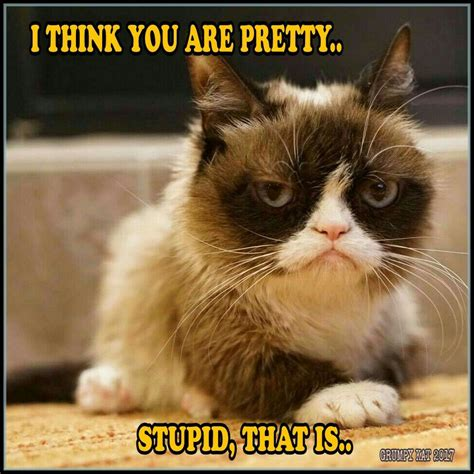 Another Grumpy Cat meme by the other Grumpy Kat 2017 ...