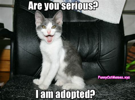 Are You Serious? I am Adopted?   Funny Cat Memes