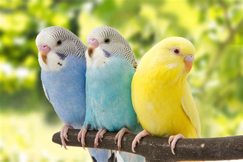 Aves Exoticas Wallpapers Backgrounds
