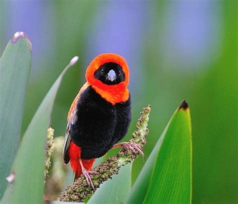 Awesome Clicks   Most Beautiful Birds Wallpapers
