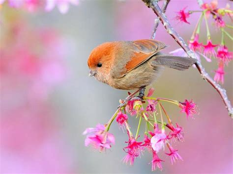 Beautiful Birds Wallpapers HD Pictures | One HD Wallpaper ...