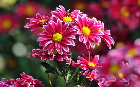 Beautiful Flower Pictures 17029 1920x1200 px ...