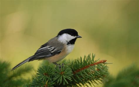 Beautiful Small Birds Wallpapers   Entertainment Only
