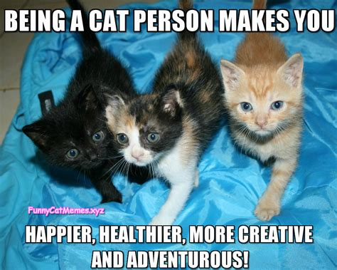 Being A Cat Person!   Funny Kitten MEME