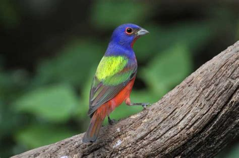 Bird s eye view has four dimensions of color | Nature ...