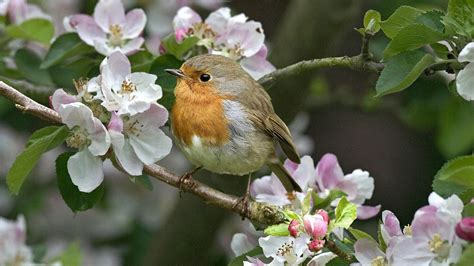 Bird sitting in a tree with flowers