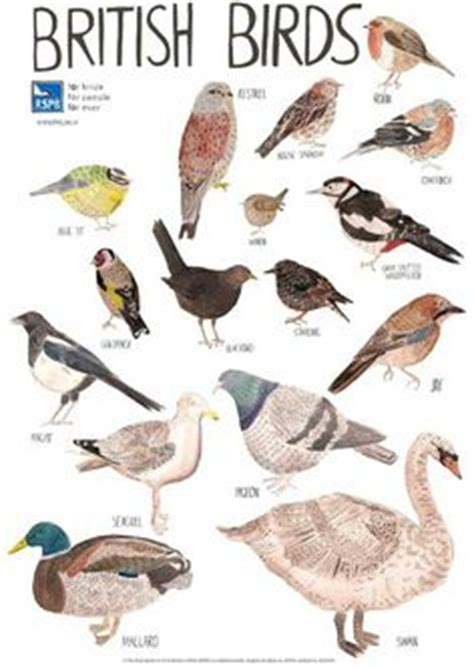 Bird spotter sheets A very helpful checklist and images of ...