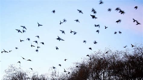 Birds flying away from the tree Stock Video Footage ...
