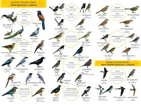 Birds Name In English | www.pixshark.com   Images ...