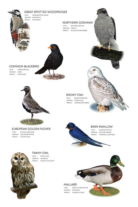 Birds Name In Hindi And English With Pictures   seotoolnet.com
