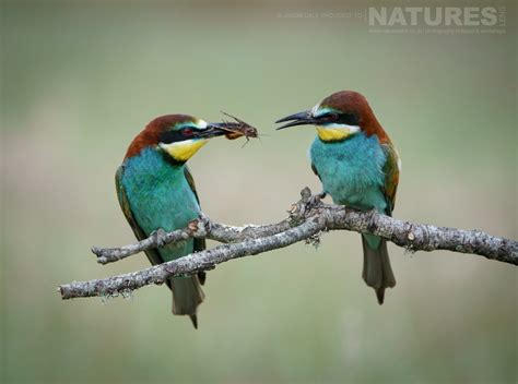 Birds of the Spanish Plains from a recent visit | NaturesLens
