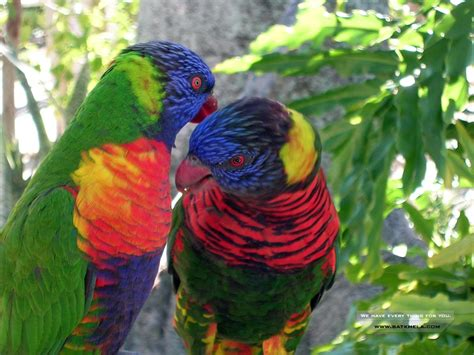 Birds Wallpapers | Where you can download all kind of ...