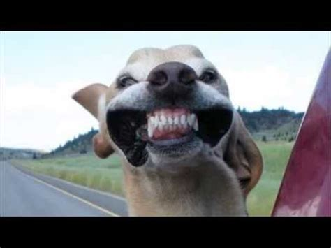 caras de perros chistosas   YouTube
