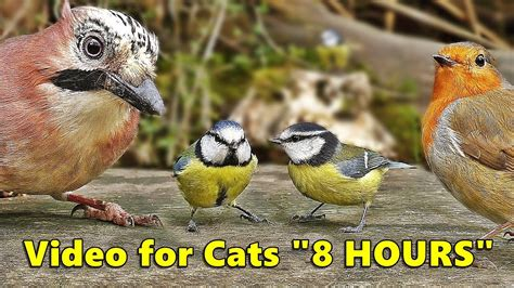 Cat Entertainment Videos : Video for Cats To Watch Birds ...