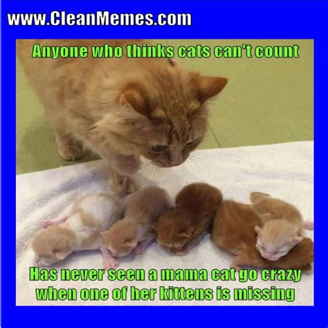 Cat Memes | Clean Memes – The Best The Most Online
